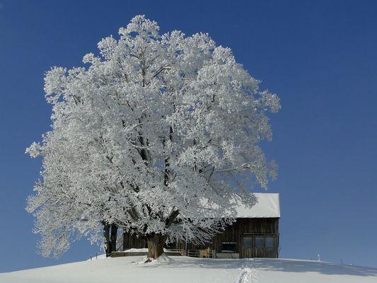 Winter Wunderland 3
