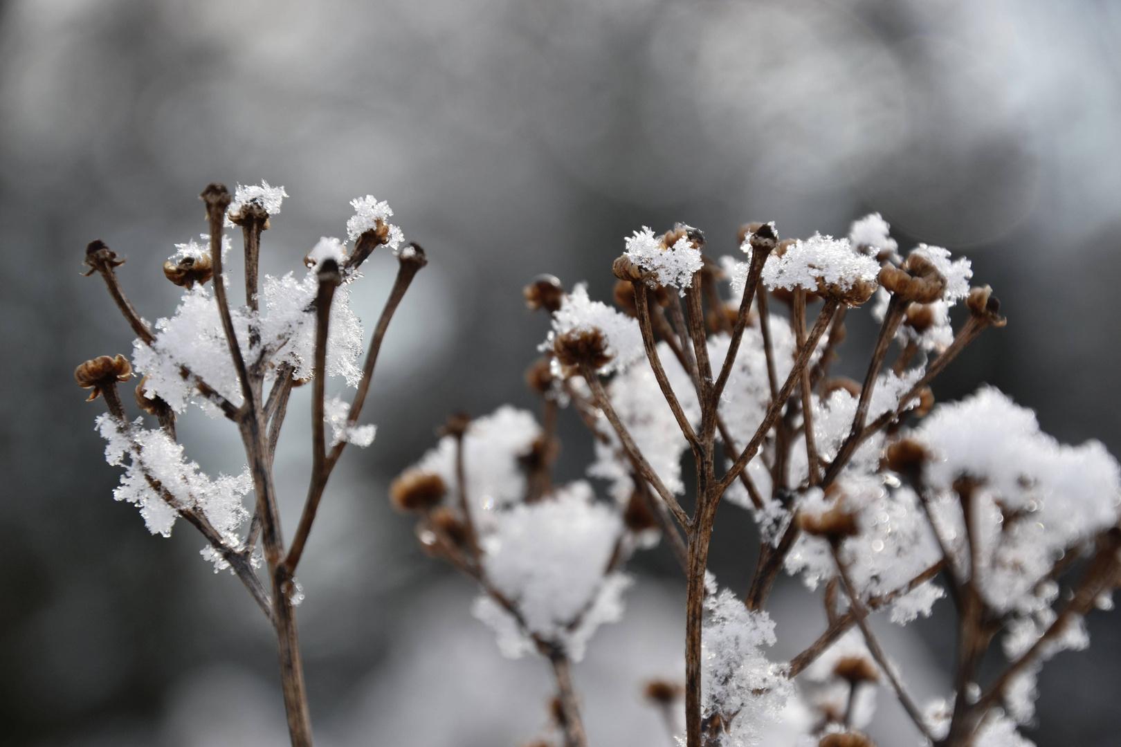 Winter zart