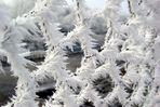 Winter Zaun