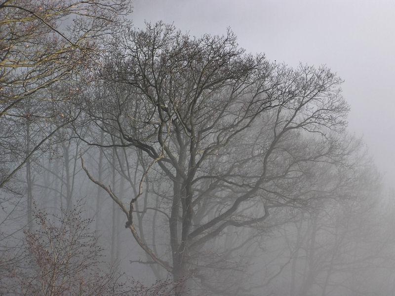 Winter2008
