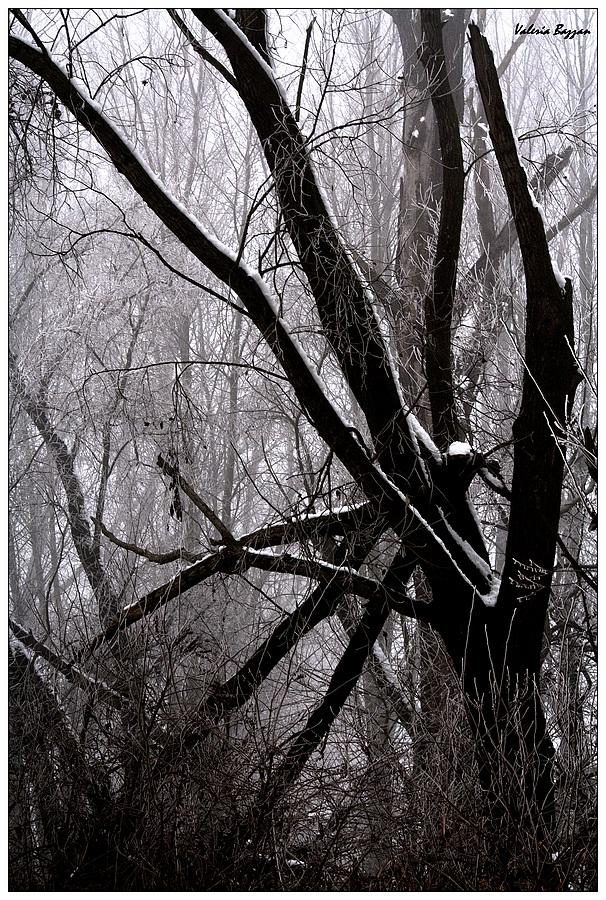 Winter/4
