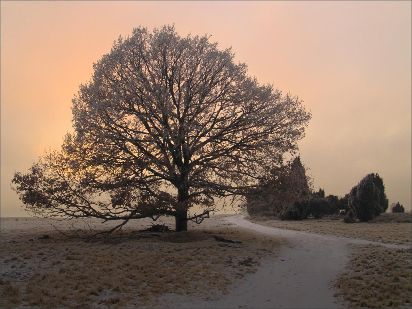 Winterabend*