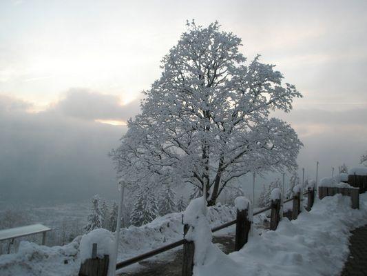 Winterabend auf dem Bachtel