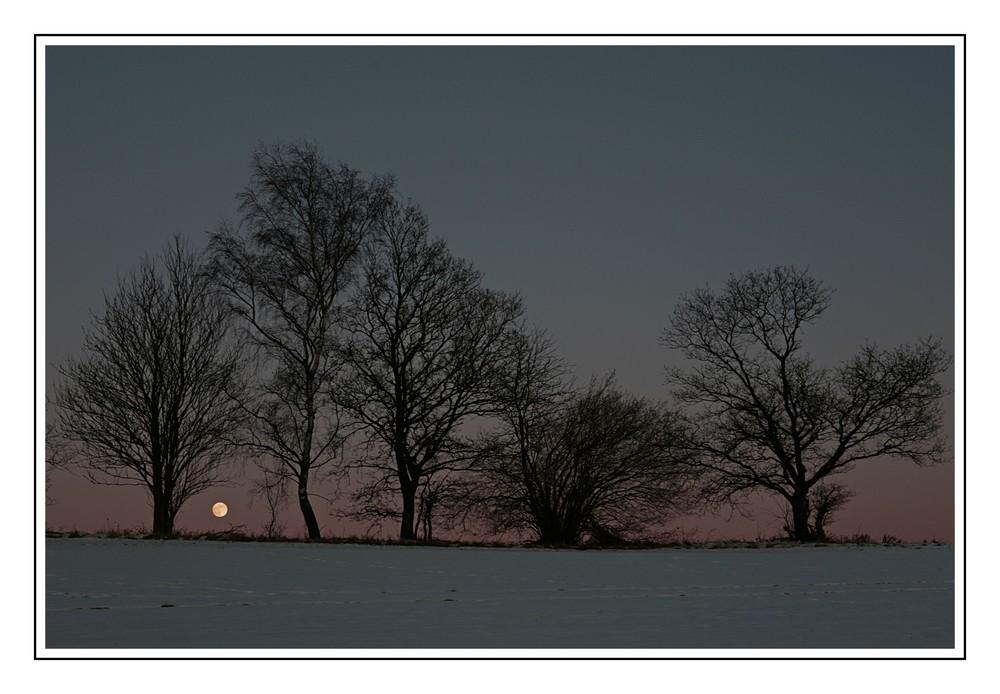 Winterabend bei Vollmond