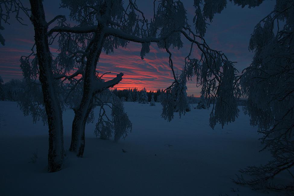 Winterabend im Hohen Venn