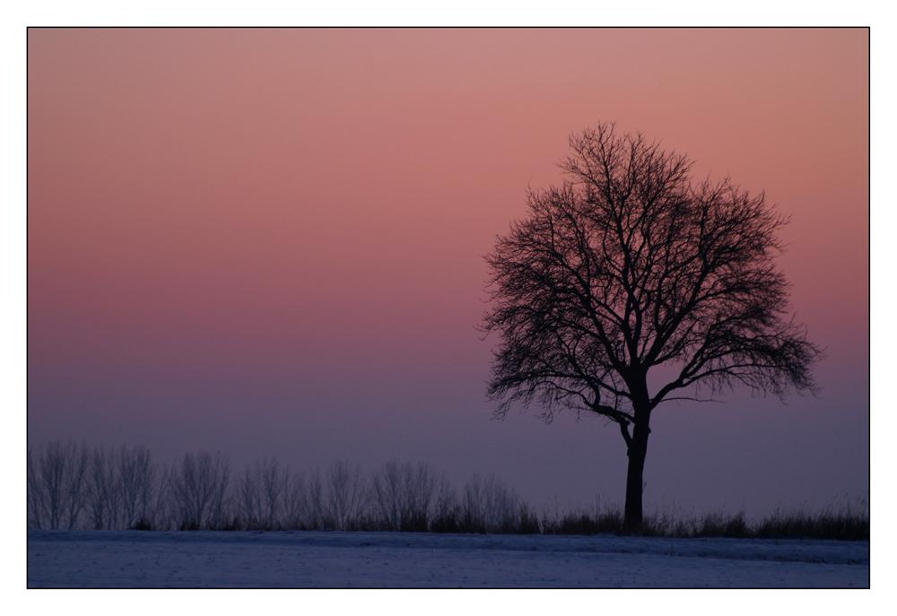 Winterabendlicht