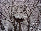 Winteräste begegnen sich