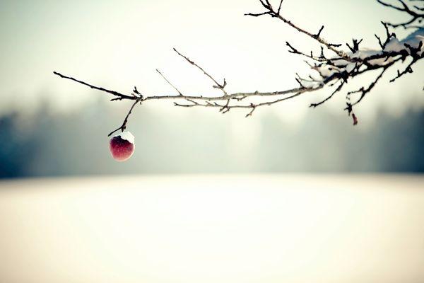 * WinterApfel *