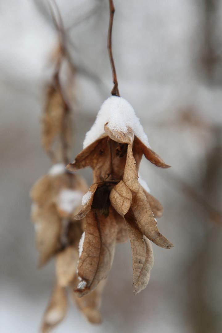 -Winterausschnitt-