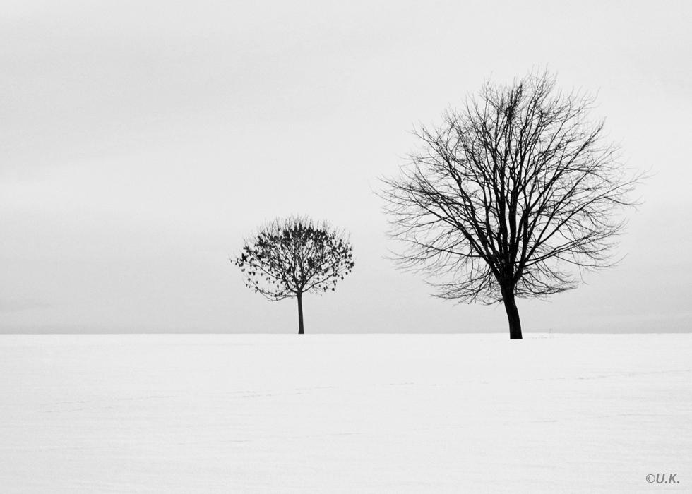 Winterbäume 01