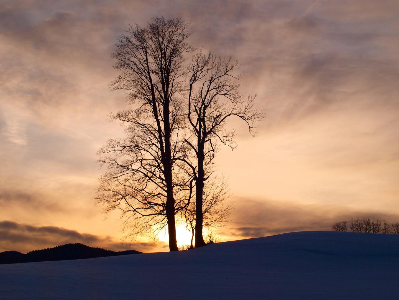 Winterbäume am Glaslberg mit der Holzeralm im Hintergrund