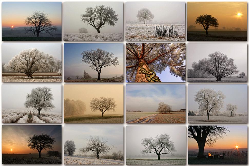 Winterbäume - Collage