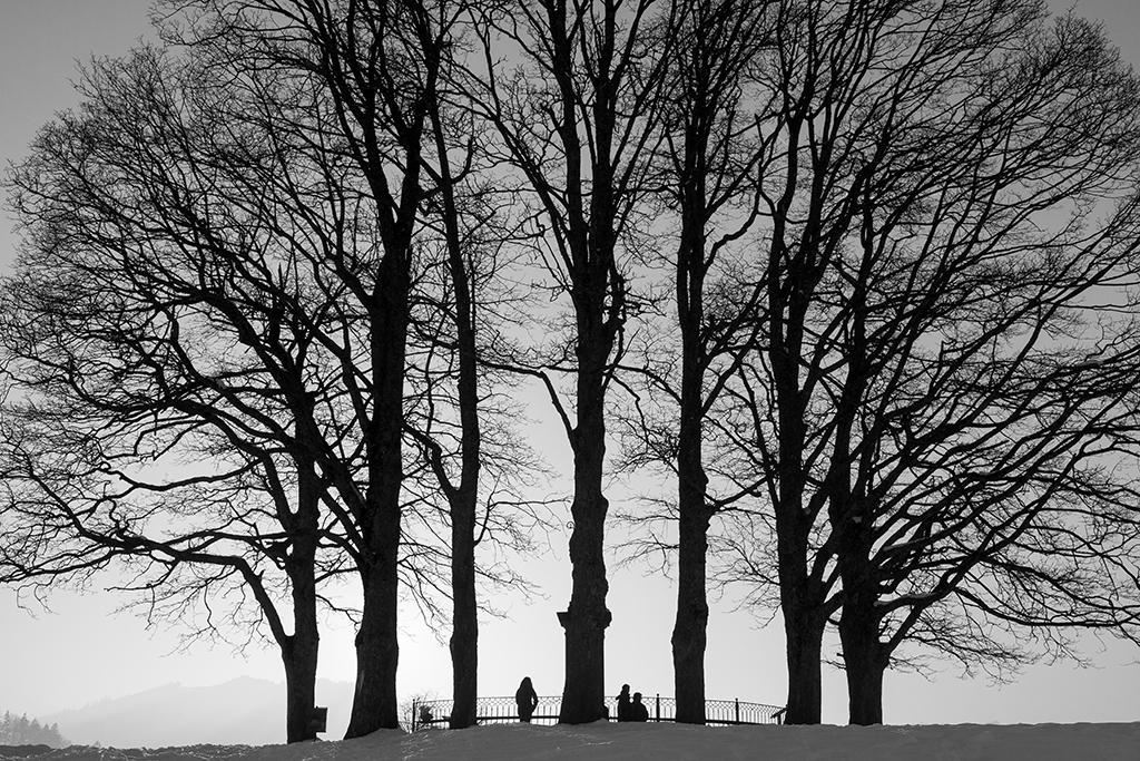 Winterbäume-Park