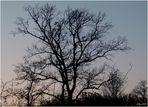 Winterbäume sind schön
