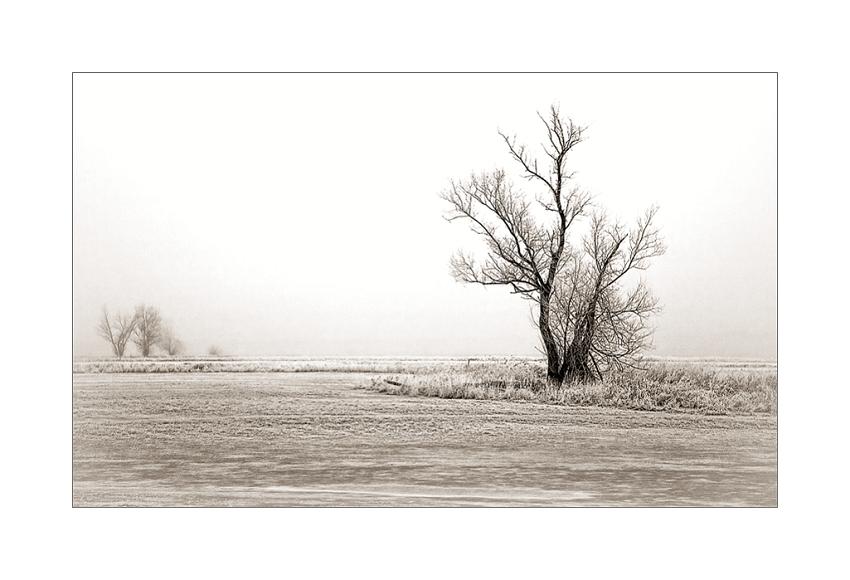 Winterbaum..