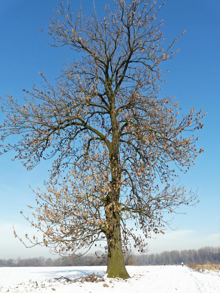 Winterbaum...