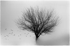 - winterbaum ++ -