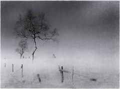 - winterbaum +++ -
