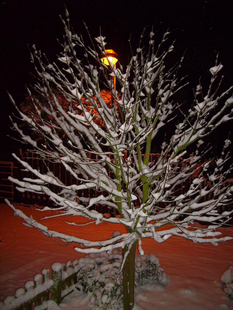 Winterbaum bei Nacht