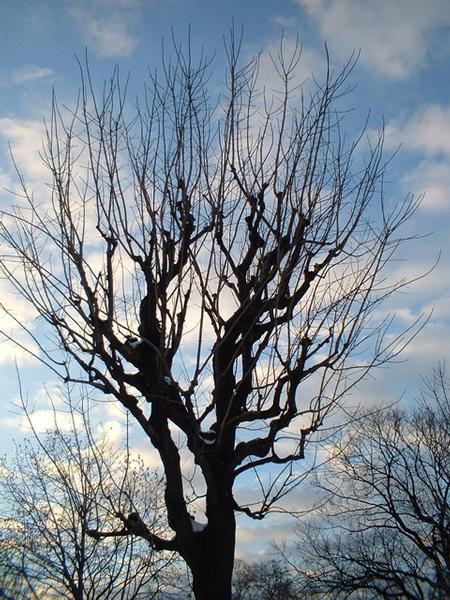 Winterbaum eines Nachmittags