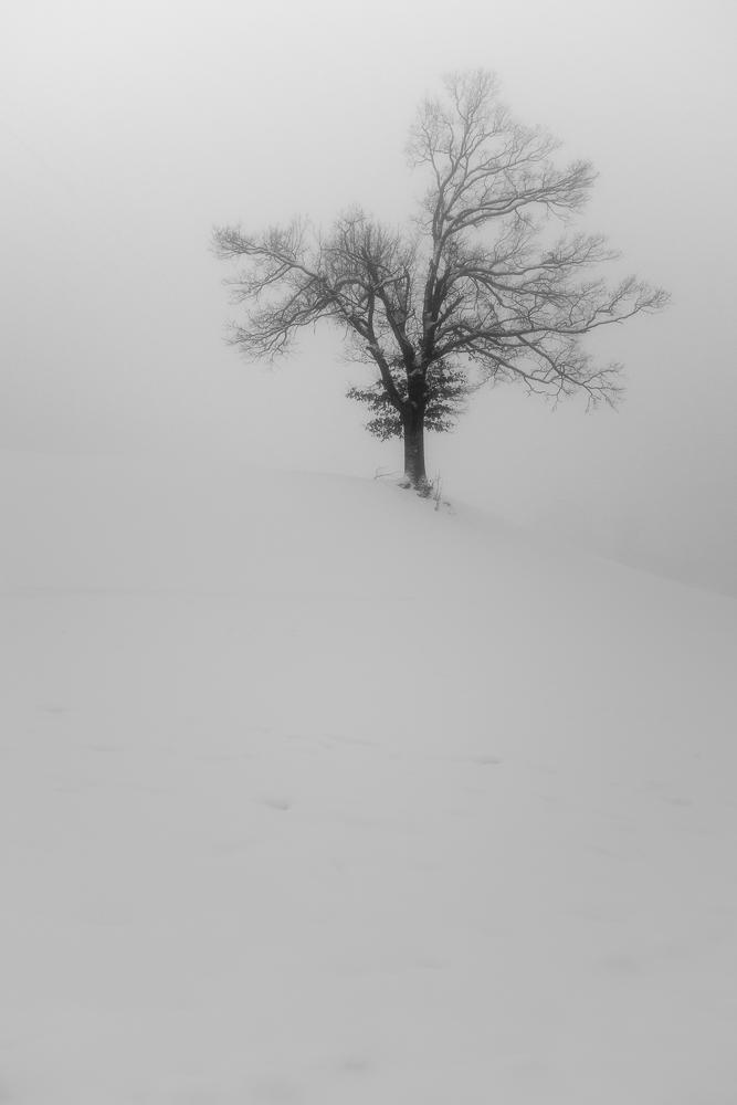 Winterbaum1