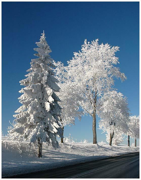 Winterbaume