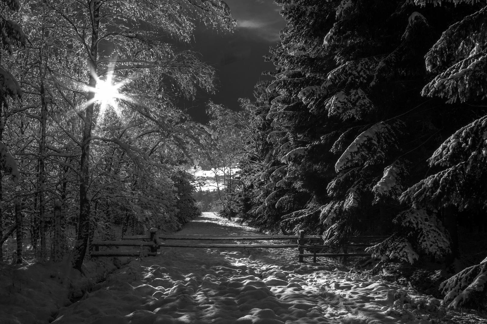 Winterbild 1