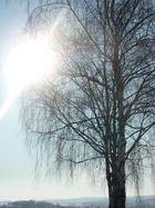 Winterbild - Am Morgen