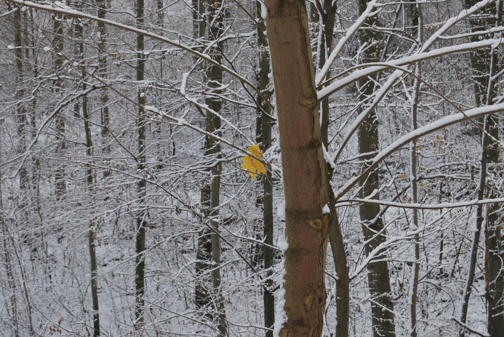 Winterbild gelb