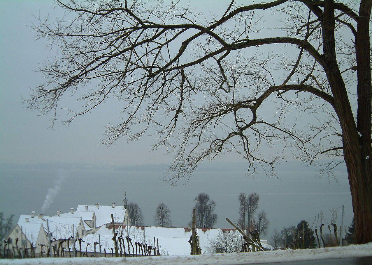 Winterbild II -Birnau/Bodensee