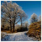 Winterbilder (1)