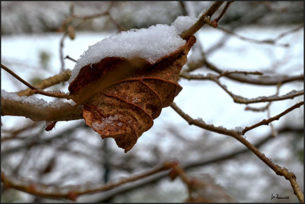 * Winterblatt *