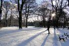 Winterblick durch den Englischen Garten