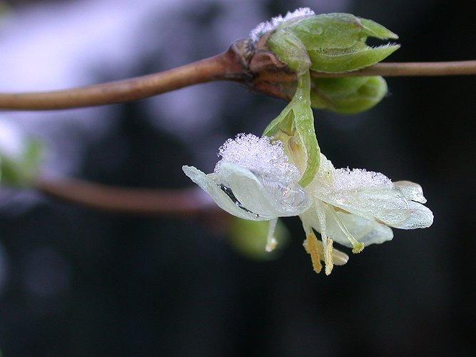 Winterblüher in unserem Garten :-)