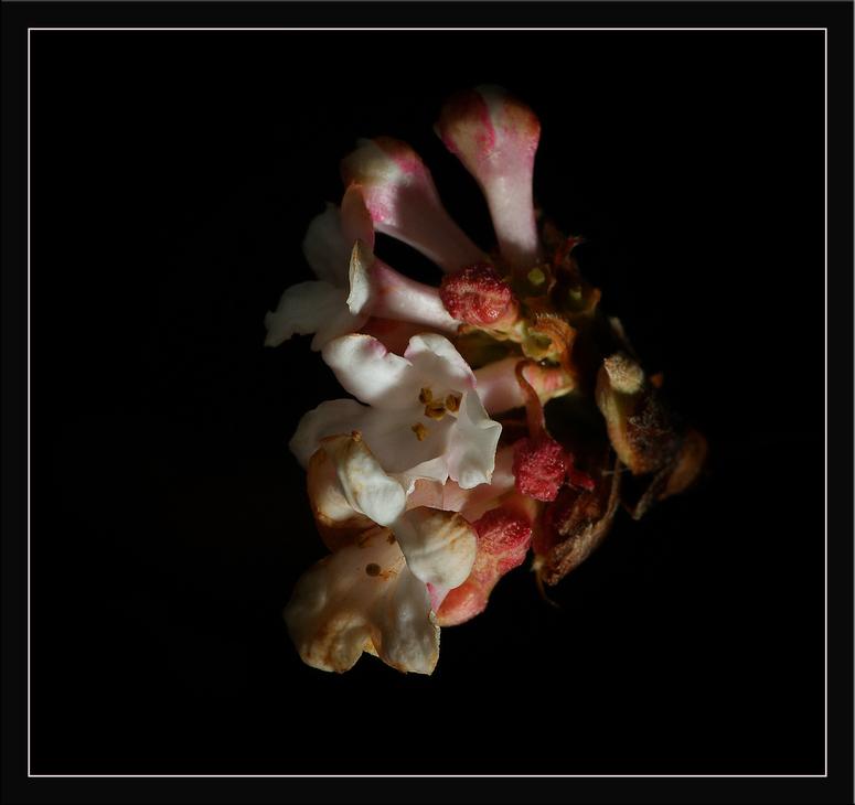 Winterblüte.