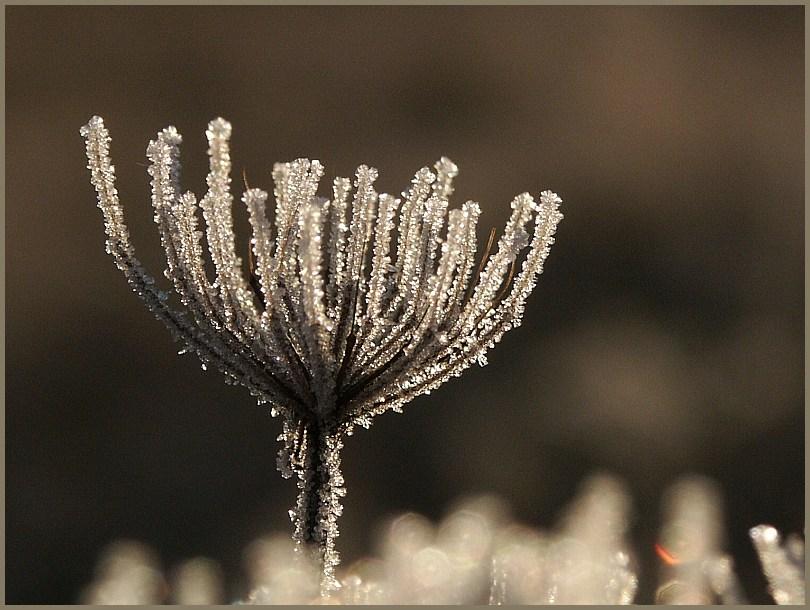 Winterblüte...
