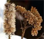 Winterblüten VIII - F11
