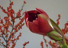 Winterblumengruß