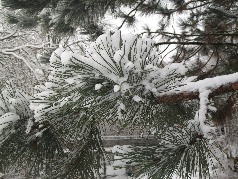 Winterchlaf....