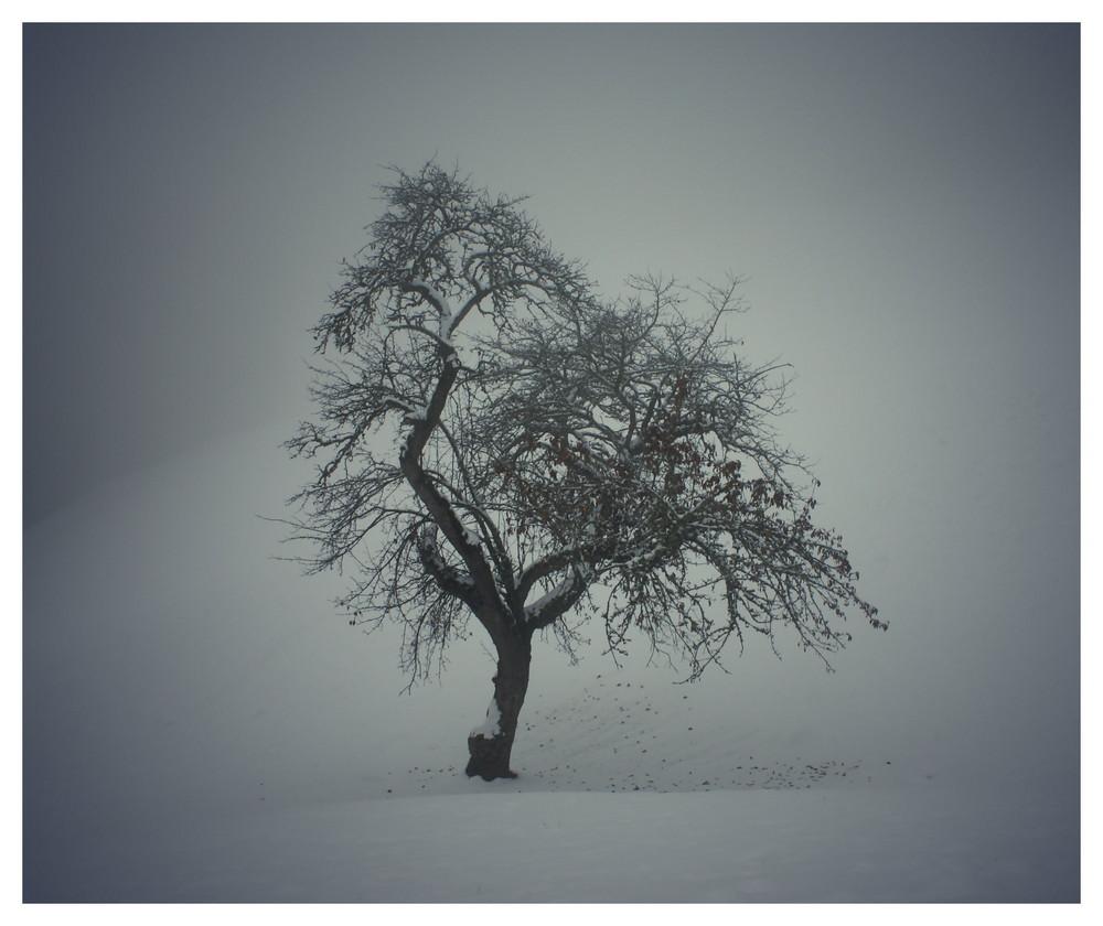 Winterdämerung