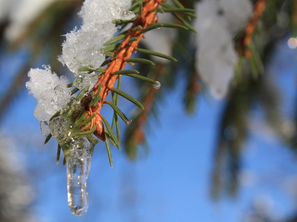 Winterdetail