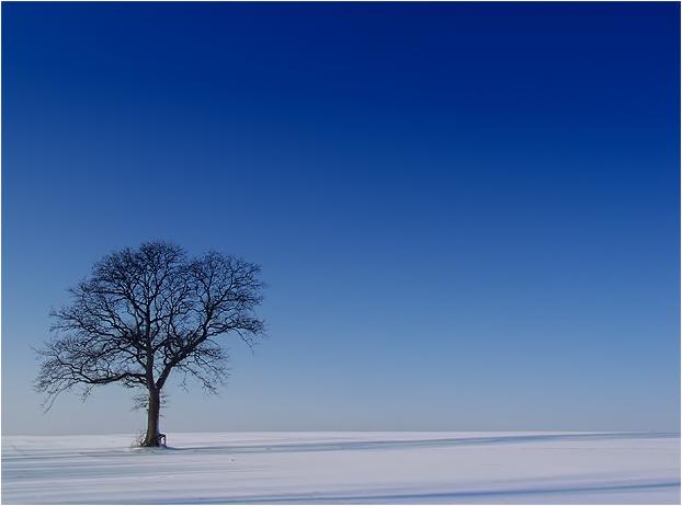 Winterdream.......(2)