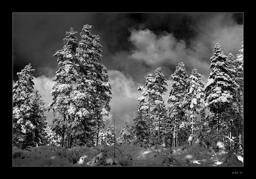 """""""Winterdreams"""""""
