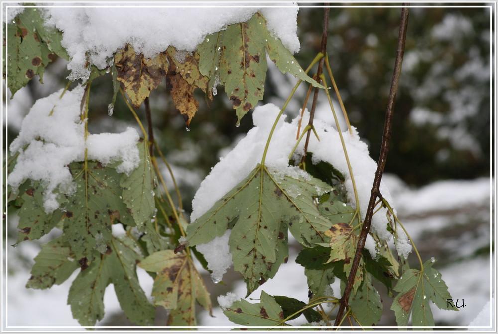 Wintereinbruch 14.10.09
