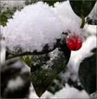 Wintereinbruch