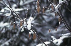 Wintereinbruch im Frühling