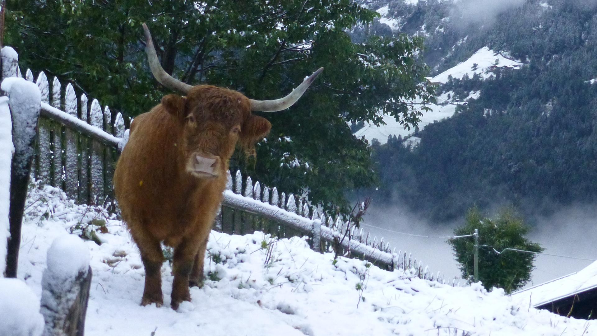 Wintereinbruch in Südtirols Bergen