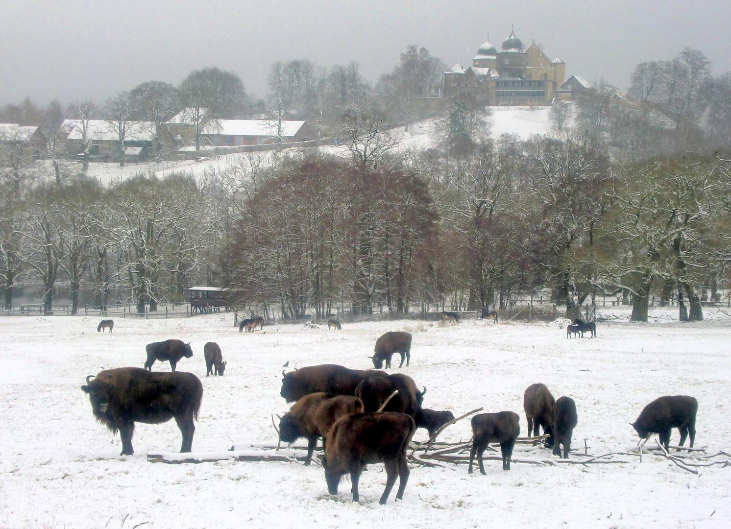 Wintereinbruch März 2013 Sababurg