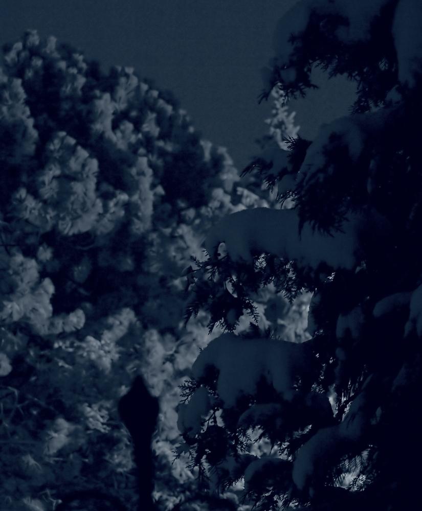 Wintereinbruch - Nachtaufnahme
