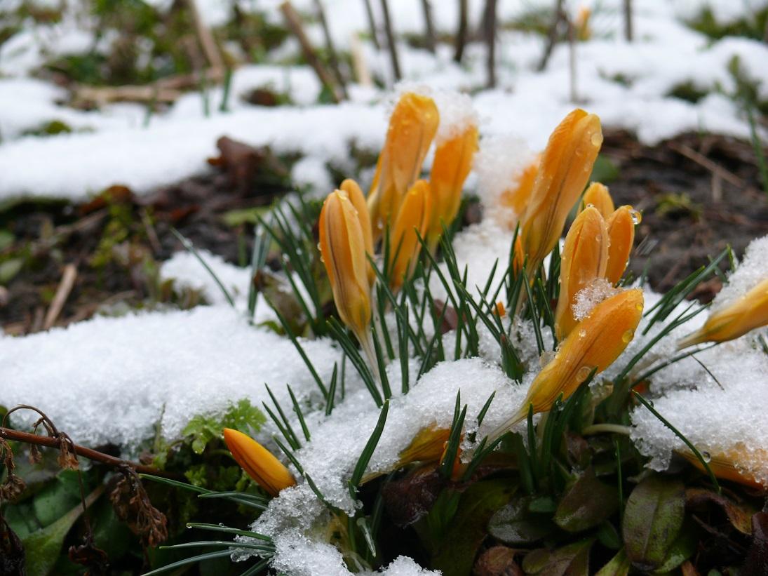 Wintereinbruch und Frühlingszeichen